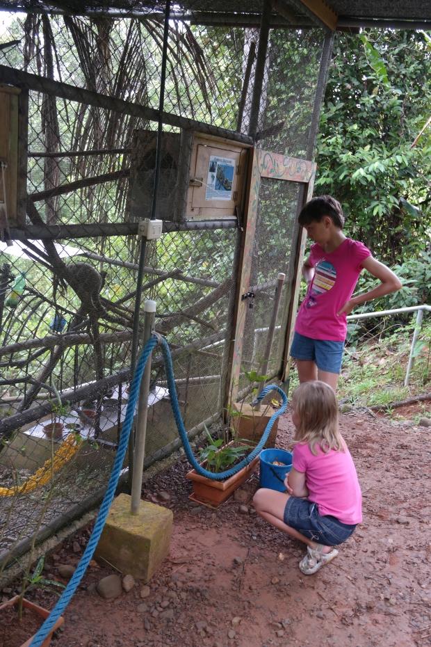 Dzieci ratują las deszczowy