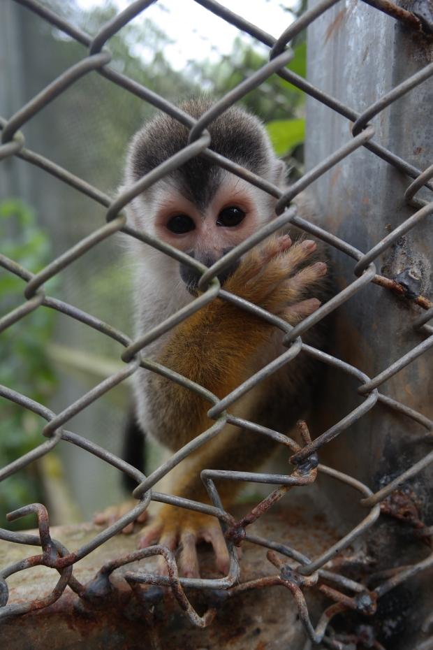 Małpka z chorobą sierocą
