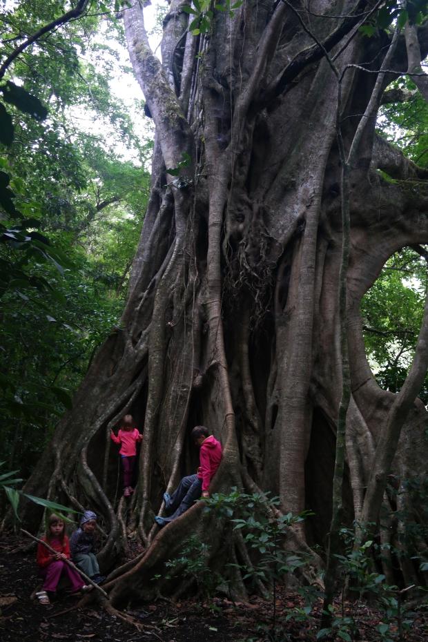 Drzewa zabójcy
